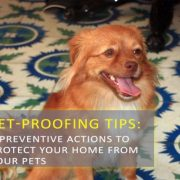 6 Preventive Actions to Protect Your Home From Your Pets