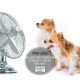 6 Ways to Stay Cool in Your Home This Summer Without Air Conditioning